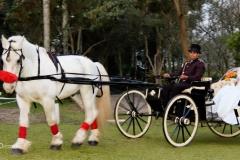noiva carruagem